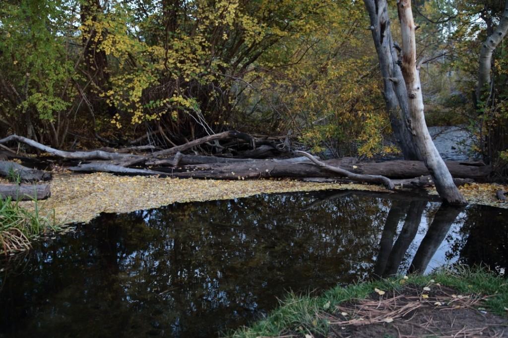Rock Creek in Tuff Campground
