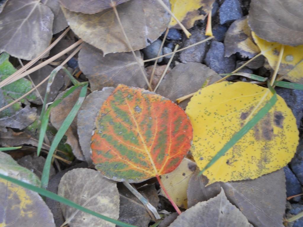 Hope Valley 2 Leaves