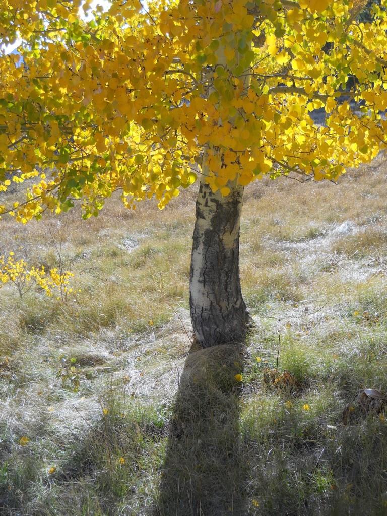Hope Valley Tree Bottom