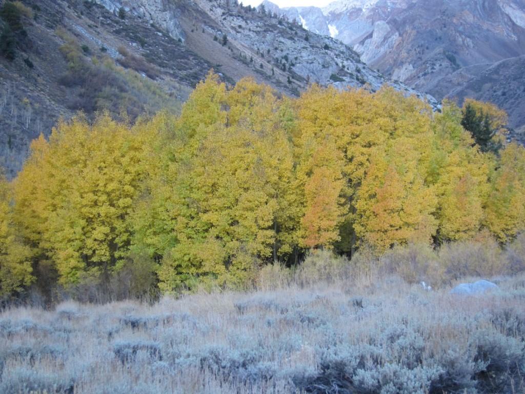 McGee Creek Canyon 2015