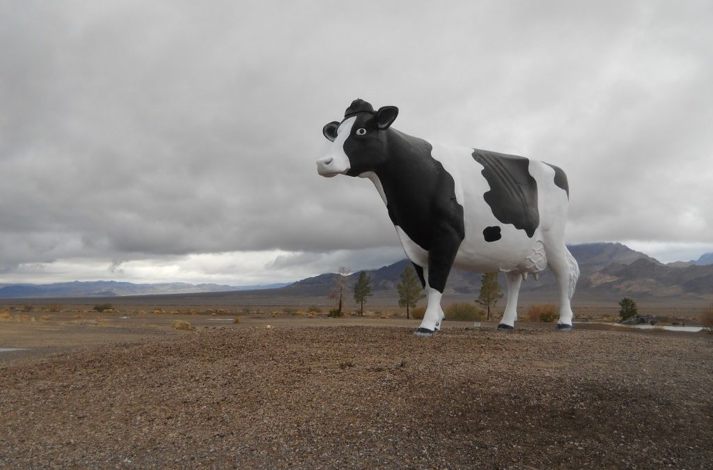 The Mooving Story Of The Giant Cow Near Death Valley