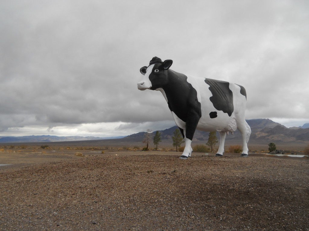 Giant Cow Photo