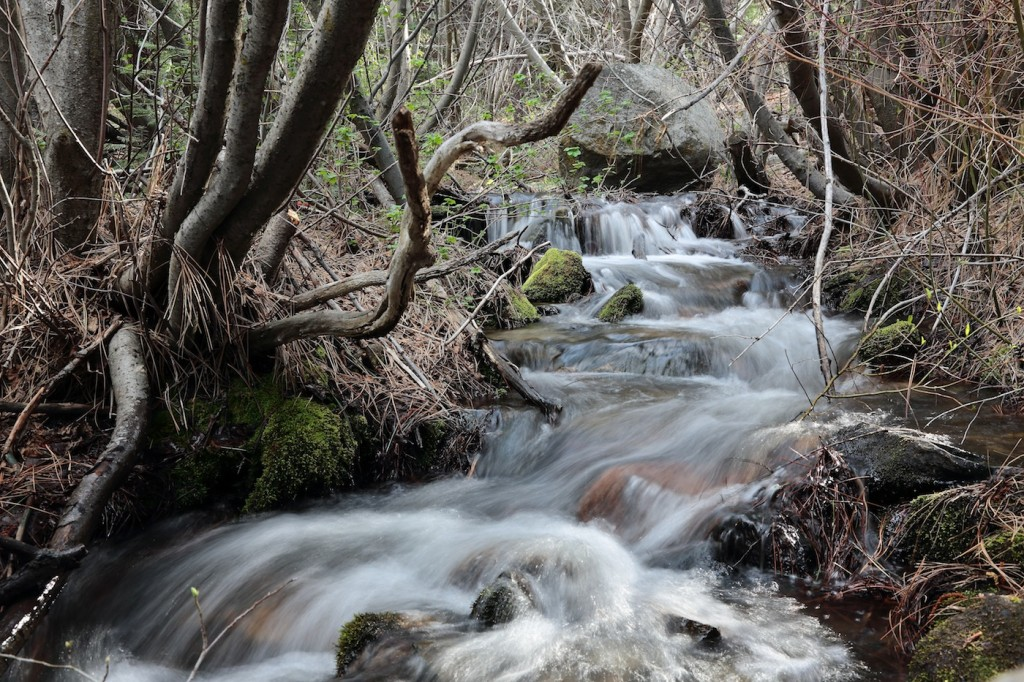 Luther Creek on One of The Carson Valley Trails