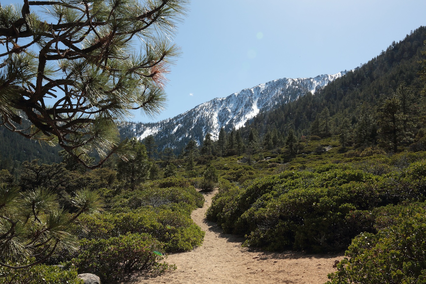 Manzanita and Mountain on Fay Luther Trail